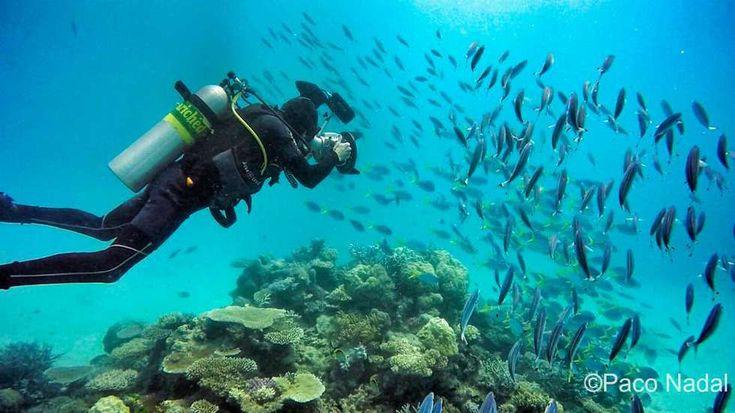 Acabo de atracar en el puerto de Cairns, en Queenlands, al norte de Australia después de pasar unos días buceando en la Gran Barrera de Coral. ¡Un sueño para cualquier amante del submarinismo! Per