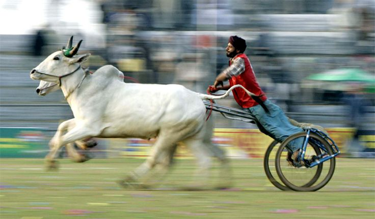 One of India's best-loved sports festivals that attract participants from all over the world, the Rural Olympics at Kila Raipur in Punjab is an event worth witnessing.