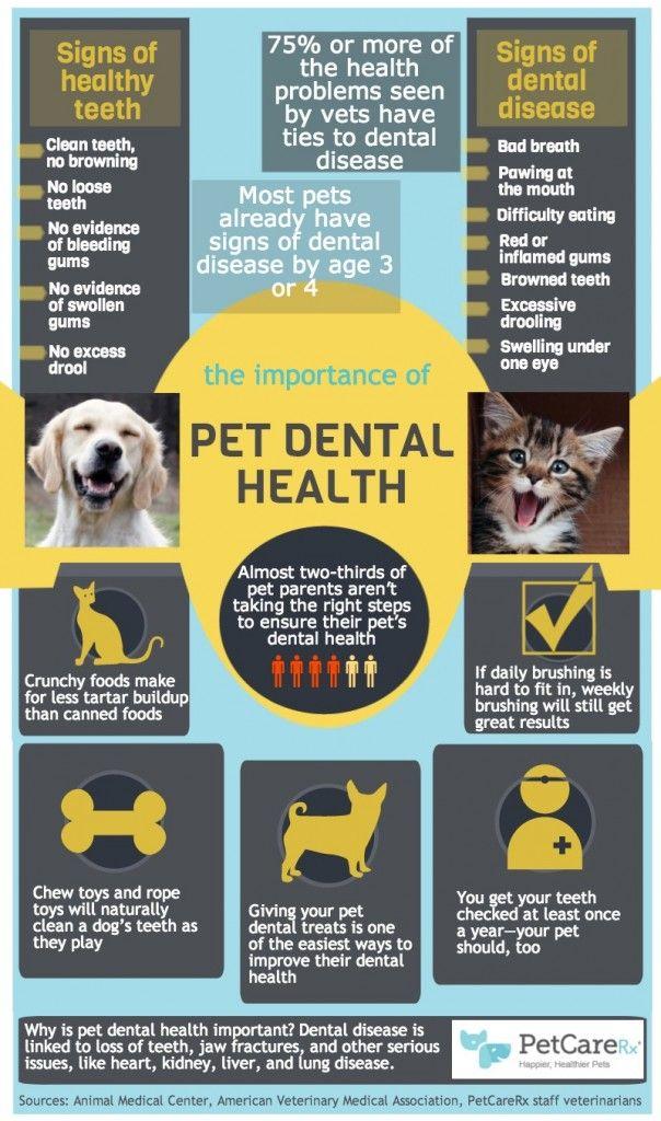 Pet Dental Health Infographic