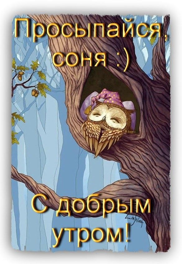 Соня засоня вставай картинки, для открытки