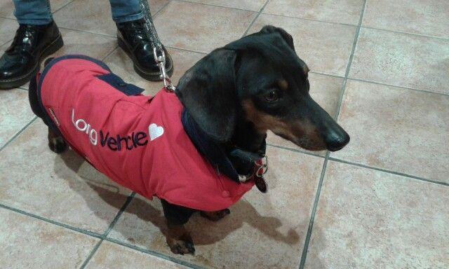 Mika è pronto per l'inverno !!!!