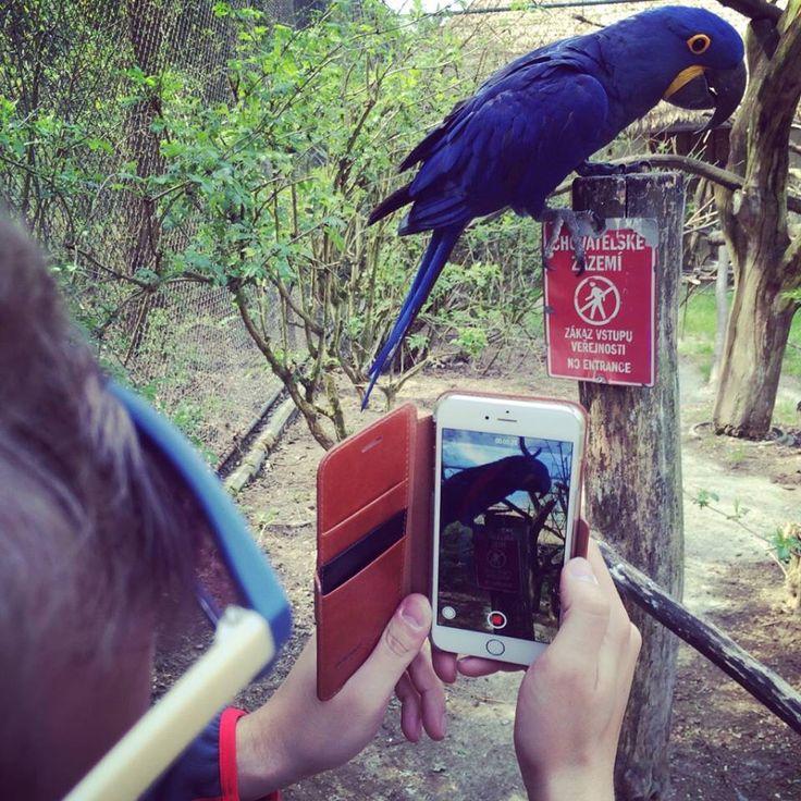 Ve zlínské ZOO jsme narazili na pohádkového papouška, který byl naprosto fantastický.