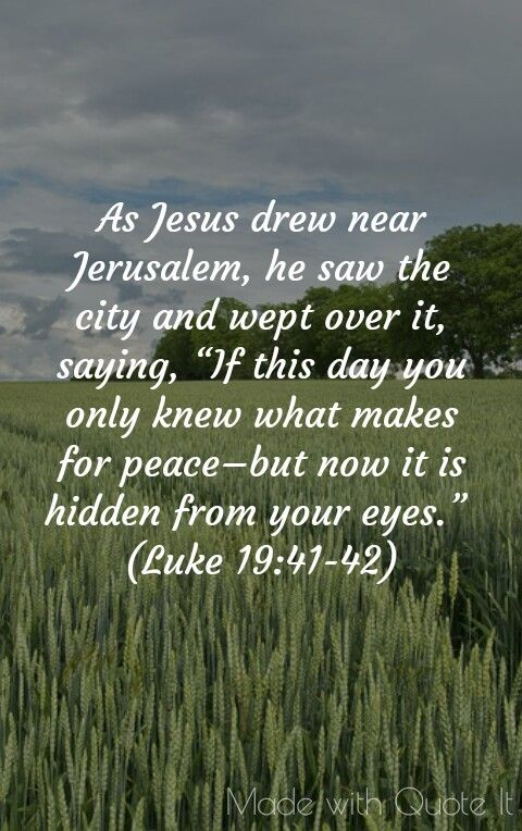 Jesus Wept Catholic Daily Reflection 11/23/17