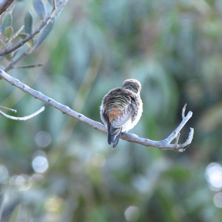 Santuario de Picaflor Arica Foto por Amanda Modak  #travel #trip #chile #arica #bird #hummingbird