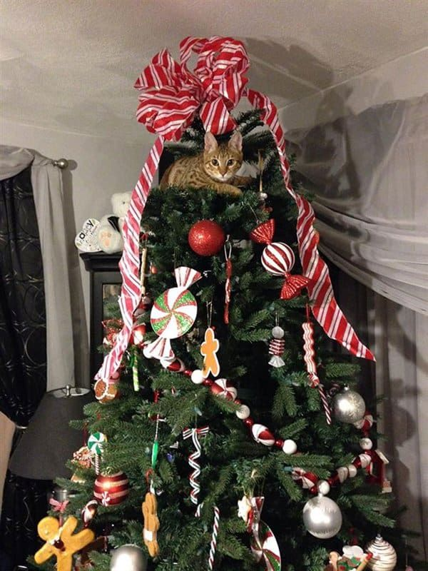 13 Cats Helping To Decorate Christmas Trees Part 2 Cat Christmas Tree Cat Proof Christmas Tree Christmas Animals