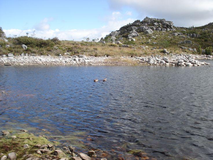 Wild ducks on De Villiers Dam.
