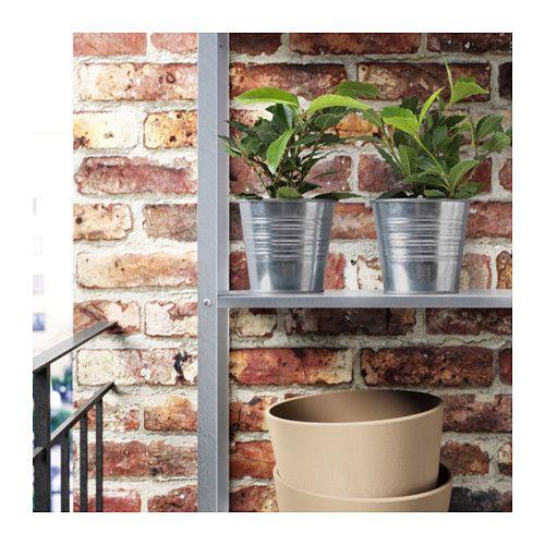 LAURUS NOBILIS Rastlina v kvetináči  - IKEA