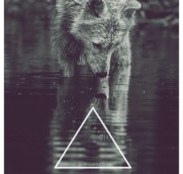 Wolf Iphone Wallpaper: Hipster Wolf Triangle