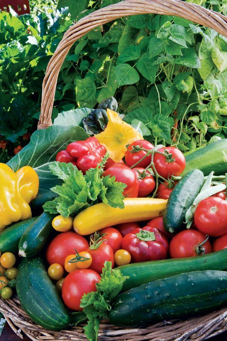 Growing garden vegetables