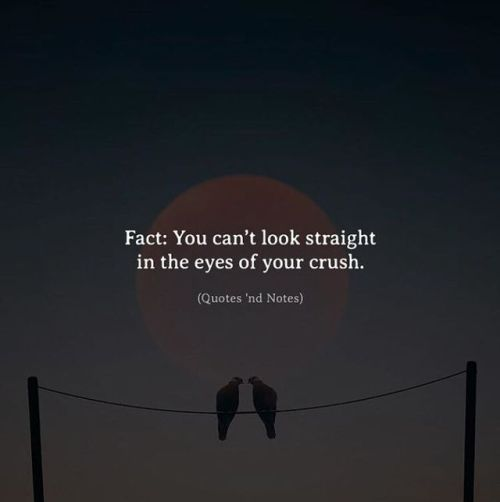 BEST LIFE QUOTES Fact: You can't look straight in the eyes of your crush. —via http://ift.tt/2eY7hg4