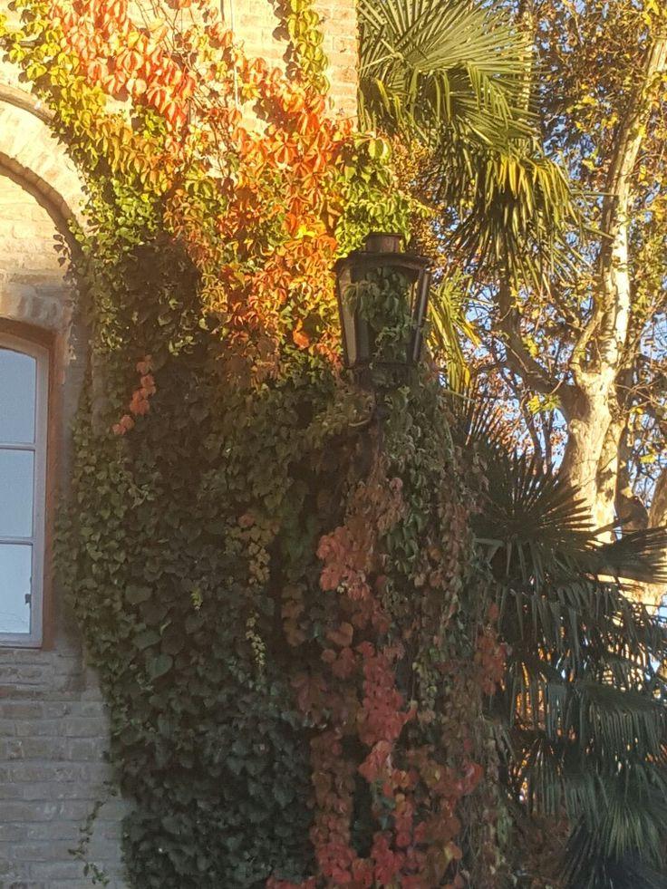 Lampione mimetizzato nell'edera rampicante. Ex scuderie Sanvitale e giardino. Fontanellato.