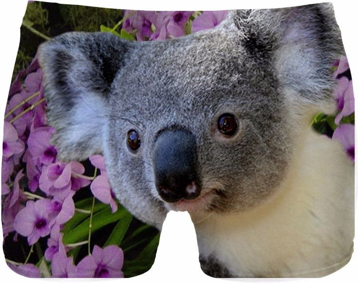 Check out my new product https://www.rageon.com/products/koala-and-orchids-men-underwear?aff=BWeX on RageOn!