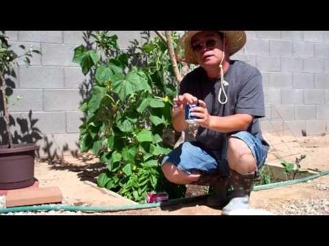 달팽이 퇴치법 7가지 - YouTube