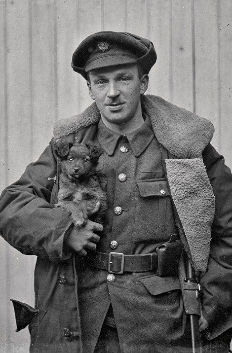 793 Best World War I Animals Images On Pinterest