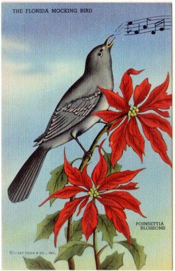 Vintage Florida Postcard - The Florida Mockingbird and Poinsettia Blossoms (Unused)
