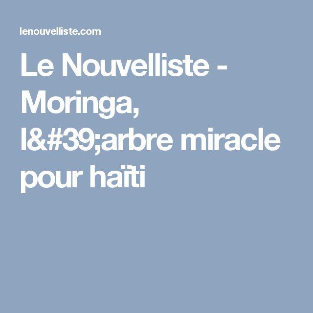 Le Nouvelliste -     Moringa, l'arbre miracle pour haïti