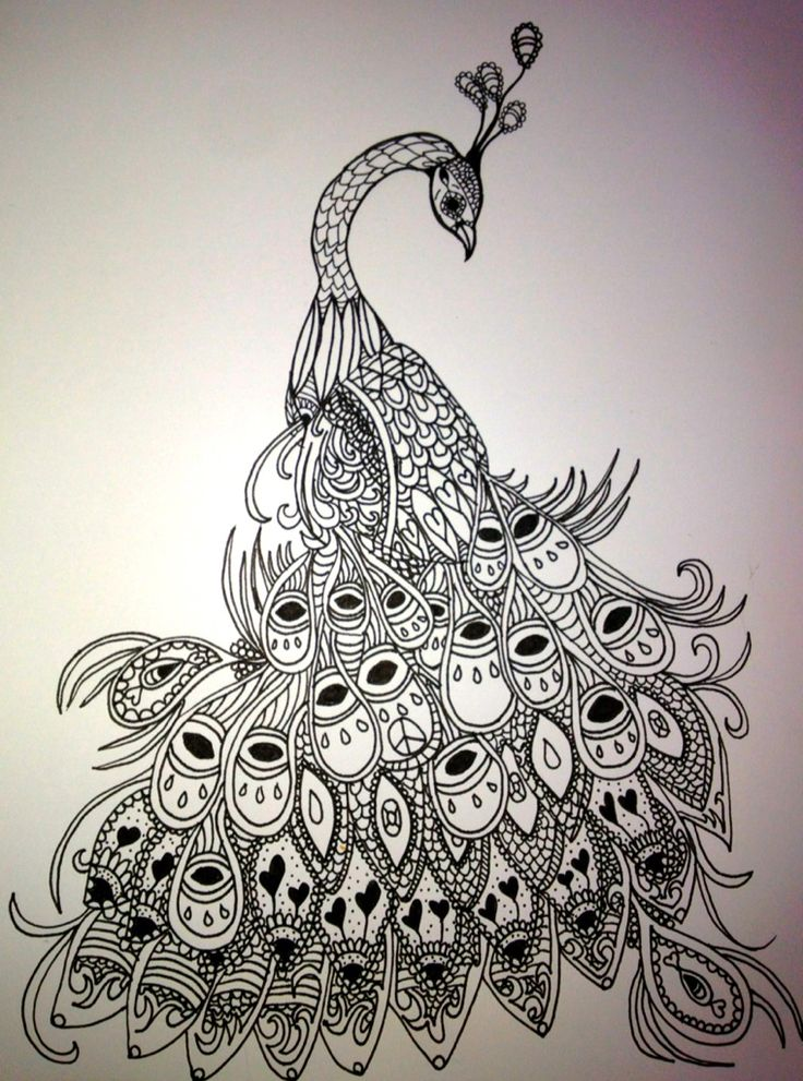Line Drawing Of Peacock : Peacock line drawing