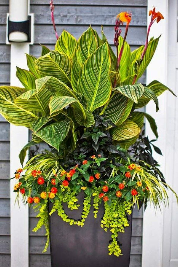 10 Beautiful Container Gardening Designs for you to try for your