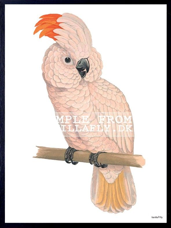 POSTER PINK PARROT (3-PACK) #PSC94