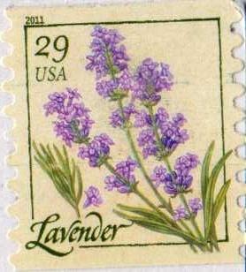 Lavender flower USA postage stamp