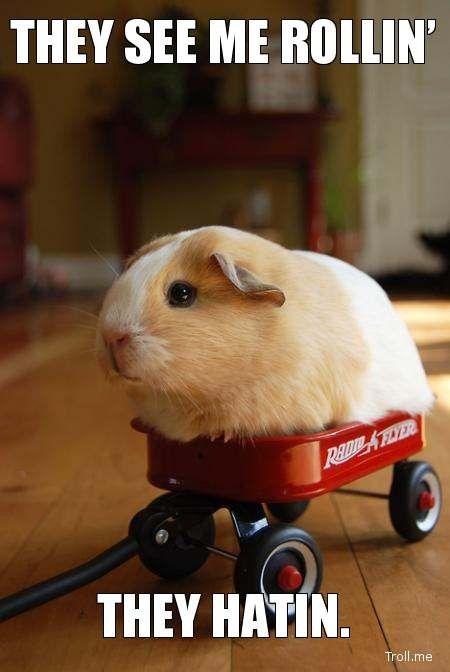 I use to ride my guinea pig around in a mini radio