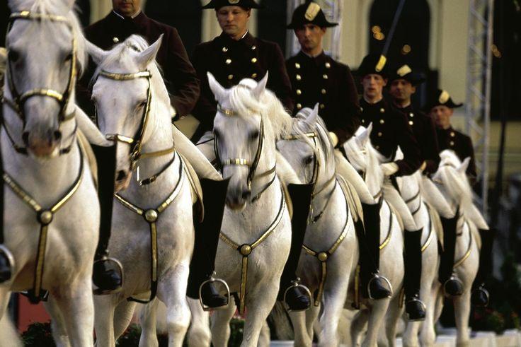Spanish Riding School ViennaMagnific Hors, Beautiful Hors, Lipizzaner Hors, Lipazzaner Hors, Lipizzaner Stallion, Lippizaner Stallion, Hors Forever, Snow White, Lippizaner Hors