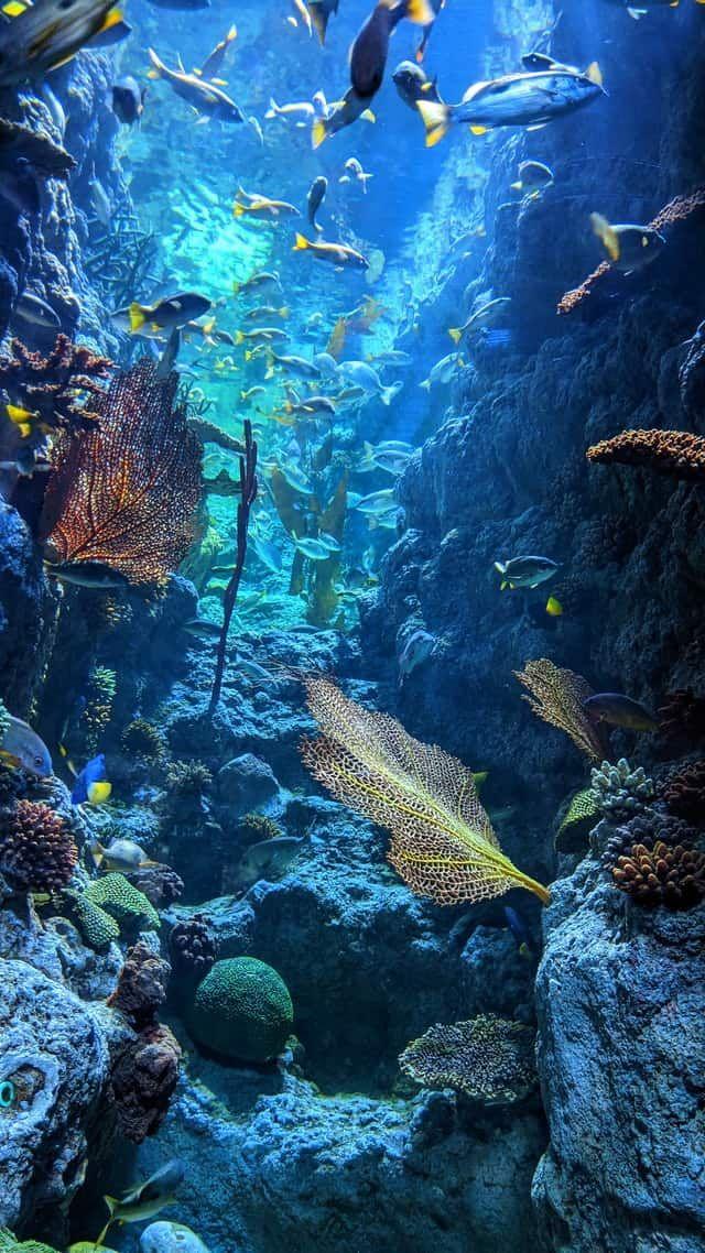 صور كائنات بحرية Underwater Photography Ocean Coral Reef Pictures Sea Photography
