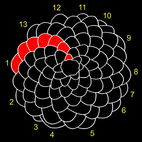 Fibonacci Numbers in Nature