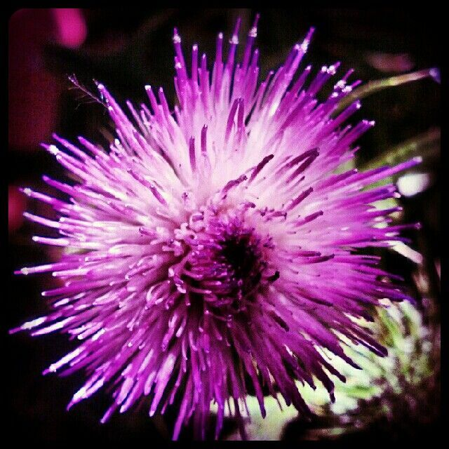 77 Best Shades Of Purple Images On Pinterest Purple