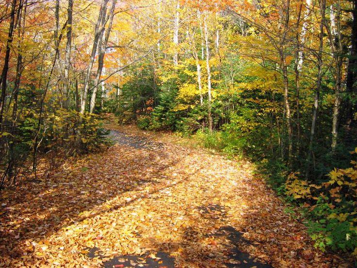 Les sentiers d'automne à L'Étoile du Nord, toujours magnifiques! Pendant la symphonie des #couleurs, durant la dernière dizaine de septembre. Réservez vos places! #etoilestdonat #randonnée #trail #pleinair #st-donat #lanaudière #automne