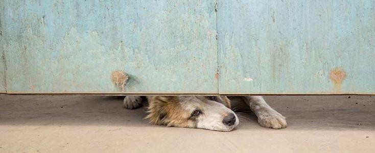 comportementaliste-canin-entraineur-chien-montreal-laval