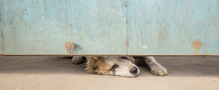 Comprendre et traiter l'anxiété de séparation chez le chien - De Main de Maître