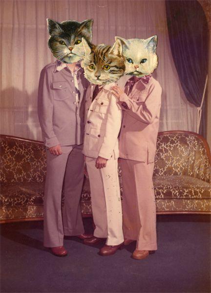 collage cats gatos rosado traje