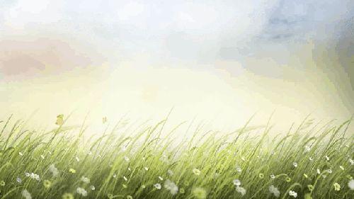 трава-с-одув.gif