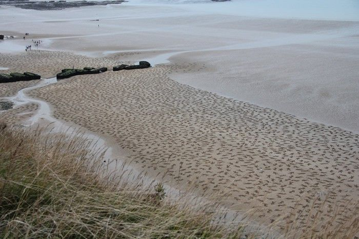 9,000 Fallen Soldiers Etched into the Sand on Normandy Beach to Commemorate Peace Day  http://www.thisiscolossal.com/2013/09/the-fallen-9000/