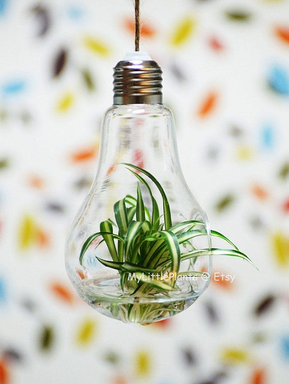 light bulb glass hanging planter container vase pot home wedding decoration wall on etsy. Black Bedroom Furniture Sets. Home Design Ideas