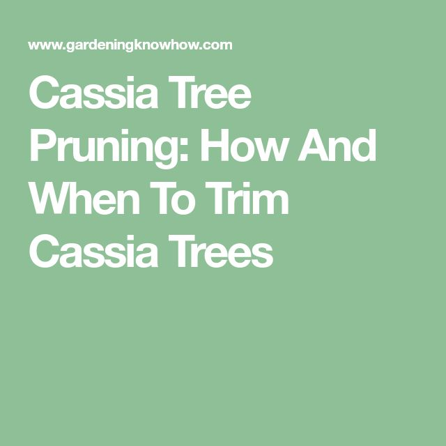 Cassia Tree Pruning: How And When To Trim Cassia Trees