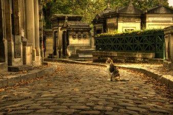 Экскурсия на Кладбище 'Пер-Лашез'. Пер-Лаше́з (фр. Père Lachaise, буквально «отец Лашез») — кладбище в Париже, одно из самых известных мест захоронения в мире. Это самый большой зеленый оазис французской столицы и один из крупнейших музеев надгробной скульптуры под открытым небом площадью около 48 гектаров.