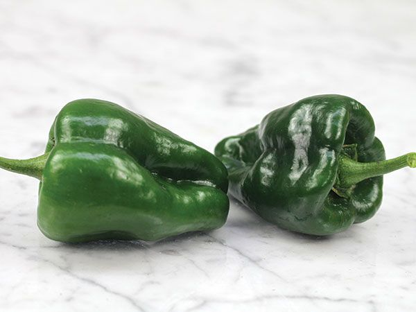 One of the most popular chili's in Mexico! 3- to 6-inch heart-shaped, poblano pepper fruits are usually of gentle heat.