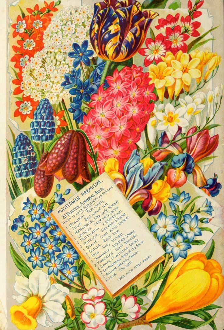 garden seed catalogs. Fall Catalogue Garden Seed Catalogs