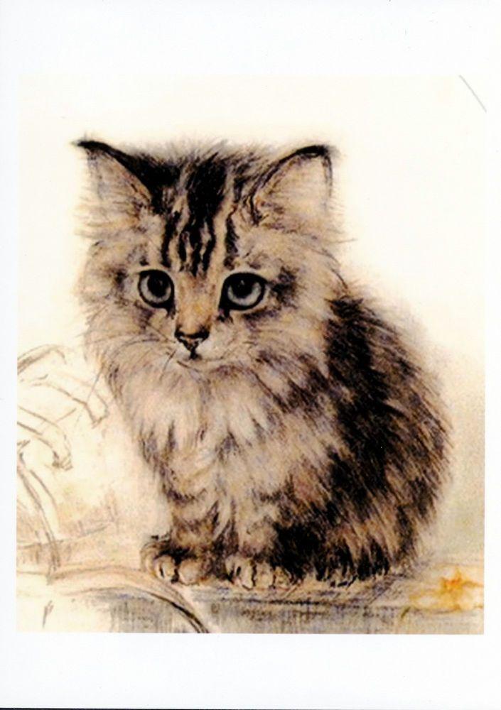 Beautiful Orange Tabby Cats Gallery Ideas Cute Fluffy Kittens