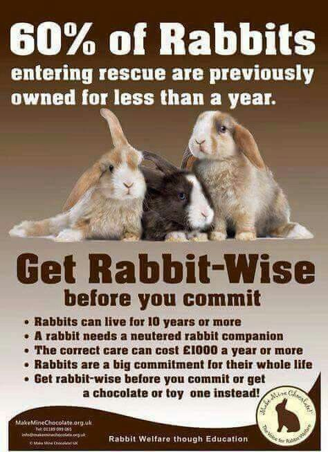 Need as much care as a dog, and can live 8-10 years. They need freedom, room to play, run and binky, not just sit static in a cage. Getting a bunny is a big commitment, make sure you're ready.