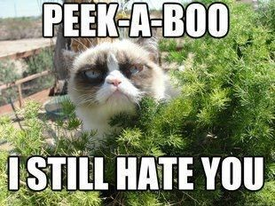 A Collection Of Grumpy Cats Best Memes - I Can Has Cheezburger? - Funny Cats | Funny Pictures | Funny Cat Memes | GIF | Cat GIFs | Dogs | Animal Captions | LOLcats | Have Fun | Funny Memes