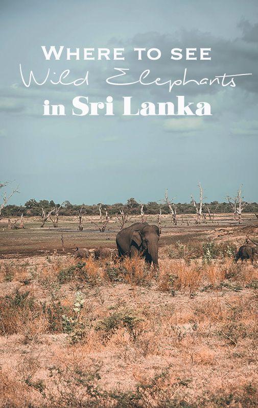 Sri Lanka Safari | Where to See Elephants in the wild | Udawalawe National Park | Elephant Orphanage
