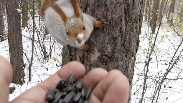 Tiere füttern im Wald