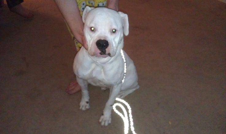 Charlotte Rescue Dogs Tucson
