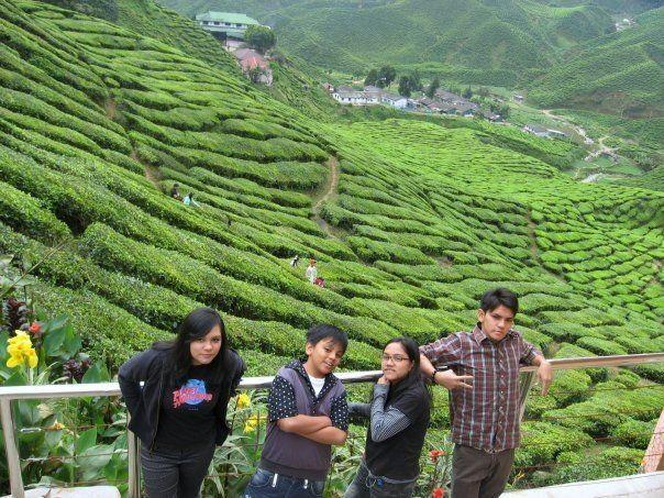 The Bros and Sis. Tea Farm - Cameron Highlands, Pahang.