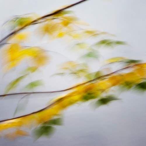 fall yellow 127sq