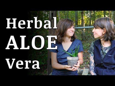 ALOE VERA Plant Medicinal Uses | Guildbrook Farm