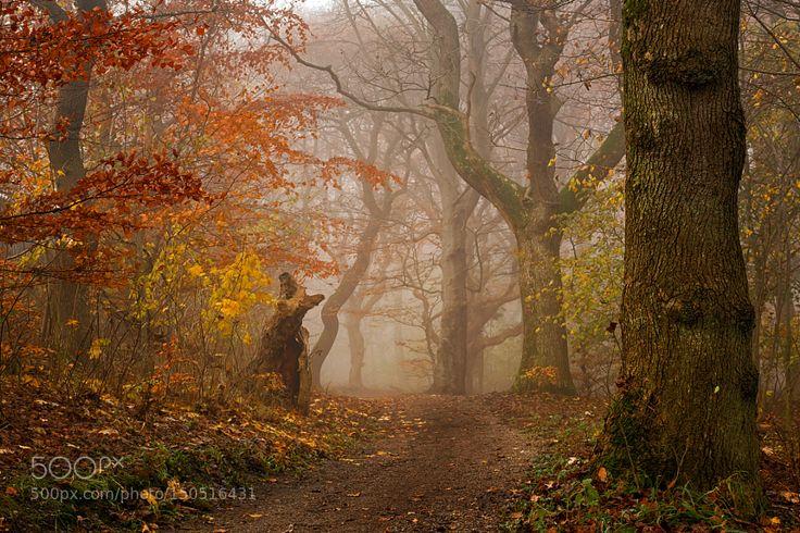 My Autumn Walk Danmark